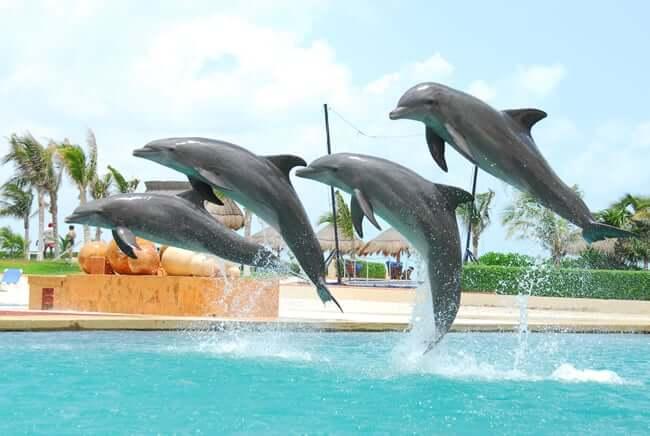 Golfinhos em Cancún