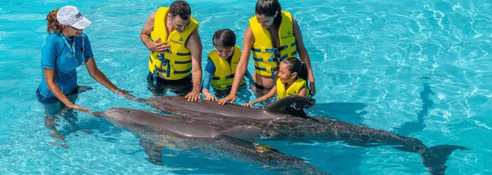 Pacotes para o Delphinus Cancún