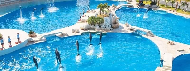 Nadar com os golfinhos no Dolphinaris Cancún
