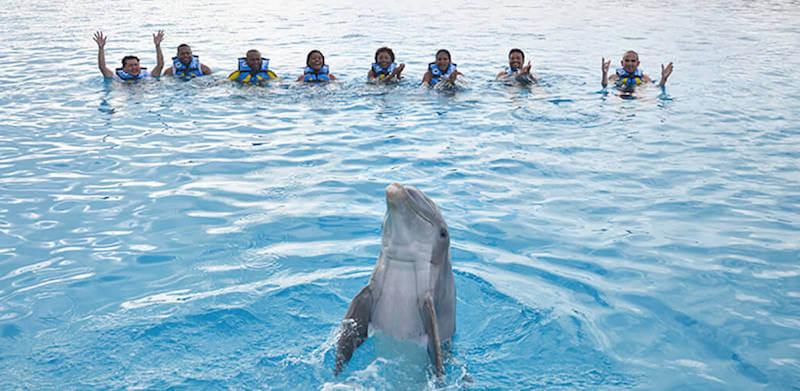 Atração nado com os golfinhos no Parque Chankanaab Beach Adventure Park em Cancún